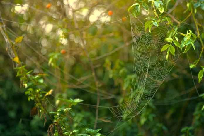 spider web formed on green leaves