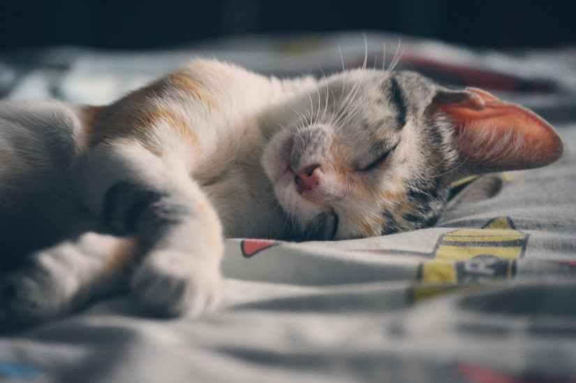 cat sleeping